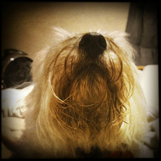 Dogs with beards.