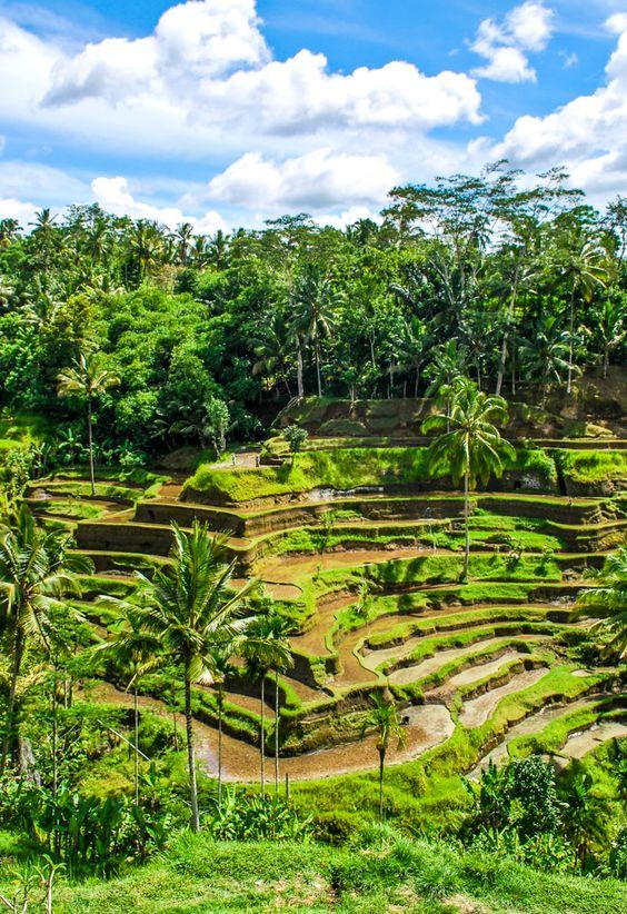 Ubud rice terraces bali photo of the day terrace the for Terrace ubud bali