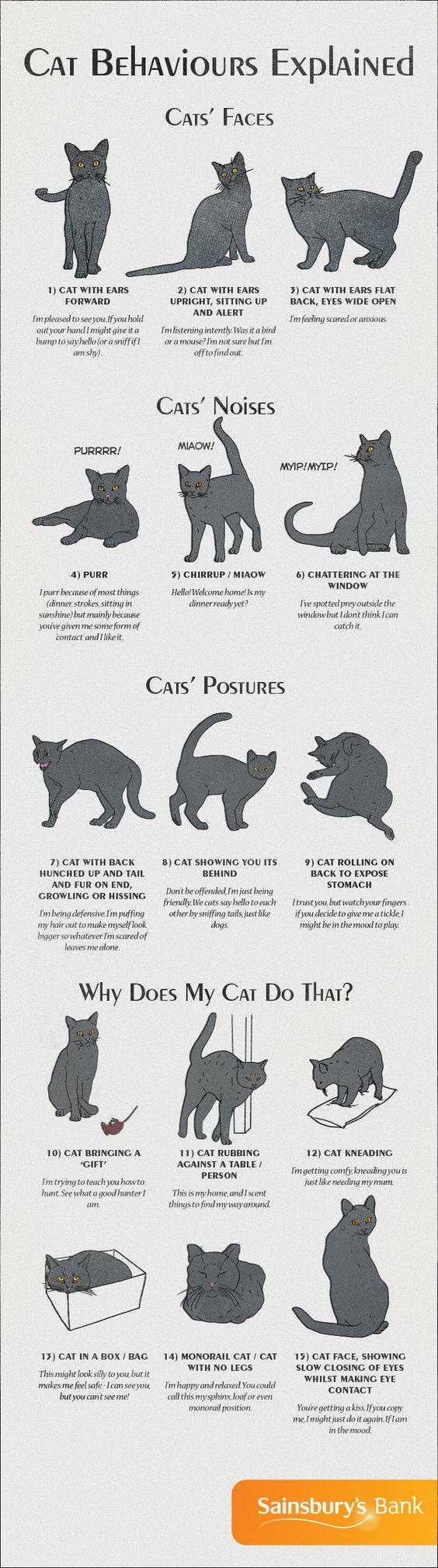 Infographic Cat Behaviors Explained Cat Behavior Cute Animals Cat Body