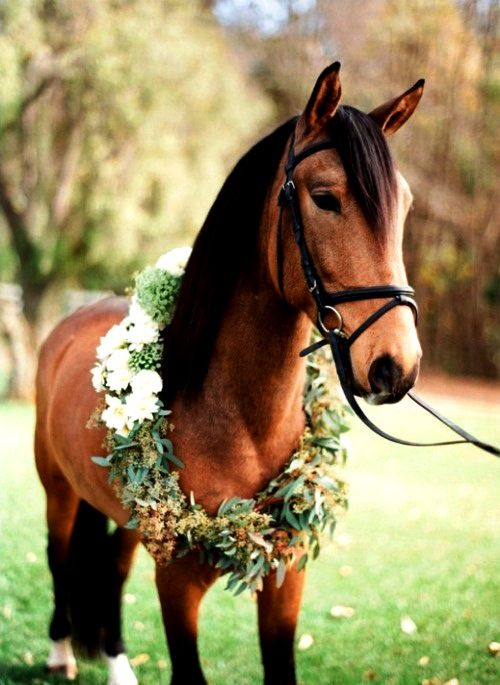 Horse with flower crown wreath