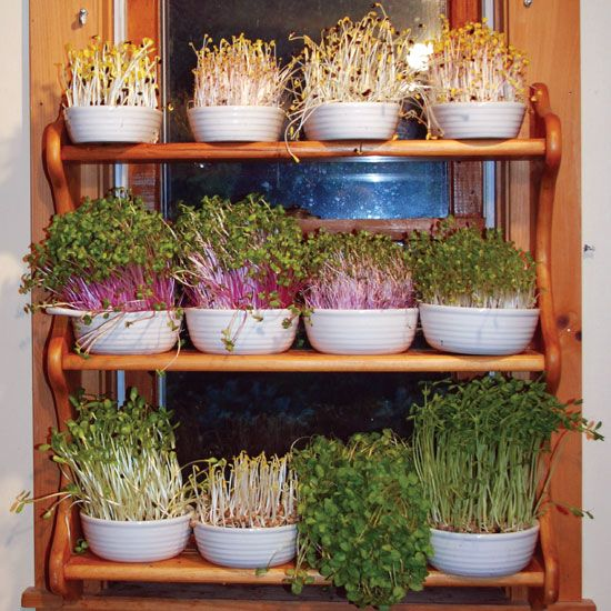 Grow A Year Round Indoor Salad Garden Organic Gardening With