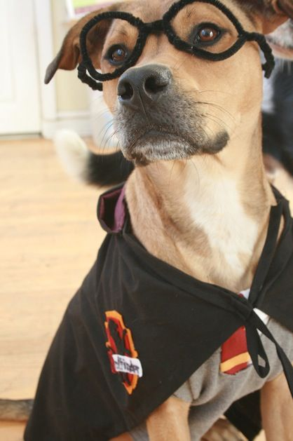 How-To: Harry Potter Dog Costume from Simone on All Free Holiday Crafts #HarryPotter #Halloween