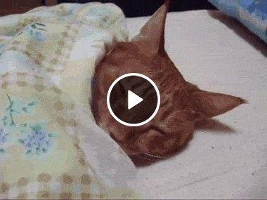 Ainda está cedo, deixem o gatinho dormir