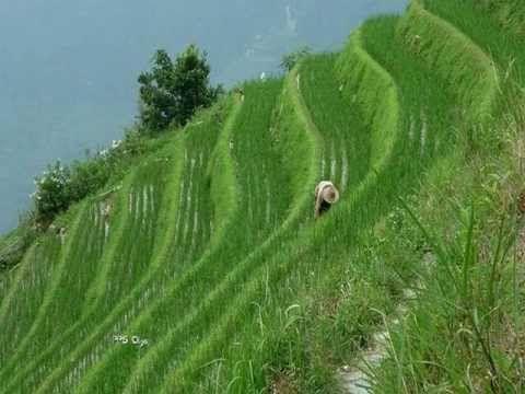 Longsheng Terrazas De Arroz En China Wmv Paisajes Terrazas Fotos