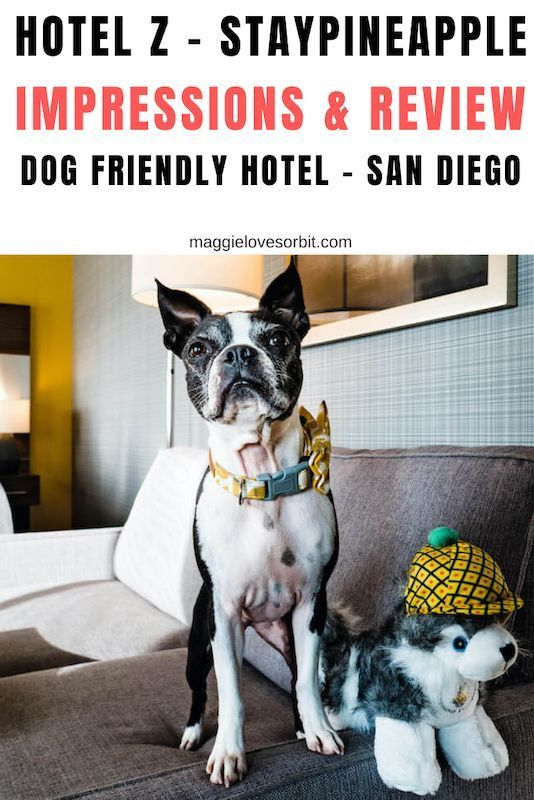 Dog Accessories Crochet Hotel Z San Diegos Most Dog Friendly Hotel Impressions And Review Spoiler Alert In 2020 Dog Friendly Hotels Dog Friends Dog Friendly Vacation