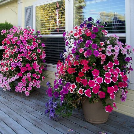 1000 ideas about flower tower on pinterest gardening planters and stacked flower pots - Growing petunias pots balconies porches ...