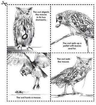 Owl, Activities and Google on Pinterest