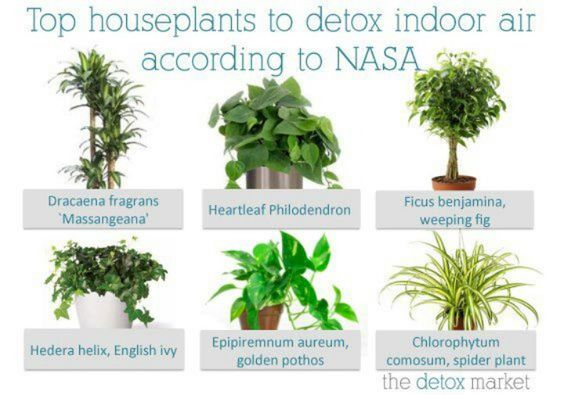 Top house plants to detox indoors home decor pinterest tops plants and house - Plants for every room in your home extra comfort and health ...