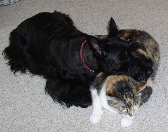 Scottie with Soft Kitty Pillow