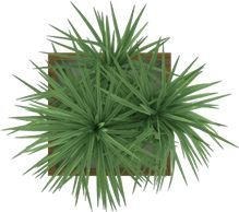 Image Result For Palm Tree Plan View Watercolor Tree Photoshop Trees Top View Trendy Plants