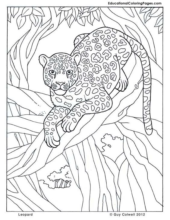 leopard jungle colouring pages page 2 coloring 3 pinterest coloring colouring pages and. Black Bedroom Furniture Sets. Home Design Ideas