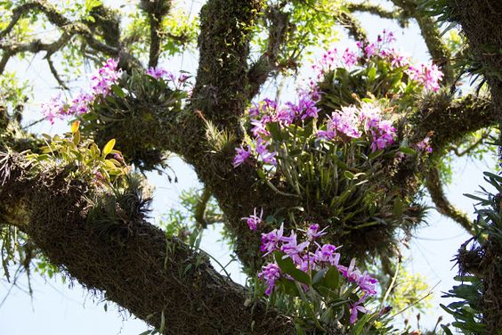 orquideas na natureza - Pesquisa Google