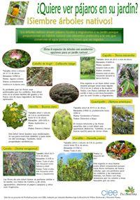 Posters de Plantas Nativas   Red Pro Nativas   Plantas Nativas de Costa Rica