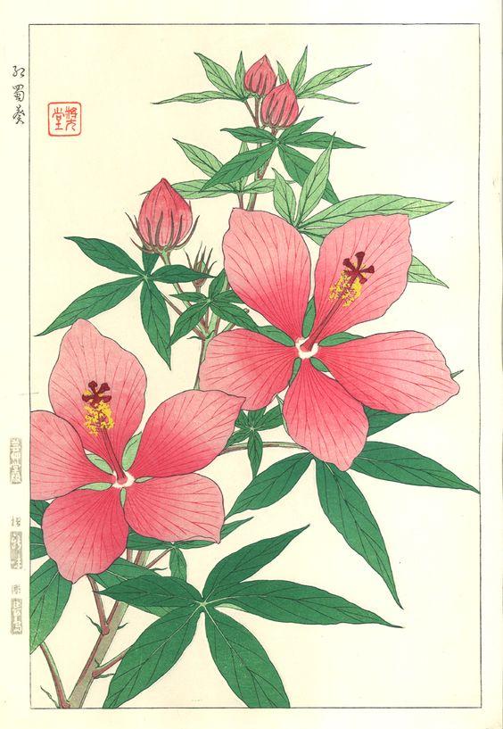 Kawarazaki Shodo - F84 Hibiscus