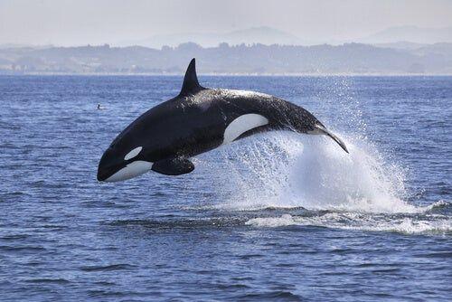 4 Animales Que Viven En La Antartida Fotos De Ballenas Orcas Animals Marinos