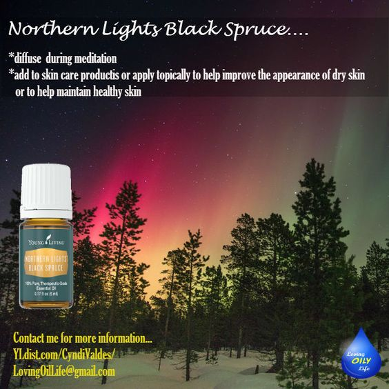 Young Living S Northern Lights Black Spruce Essential Oil