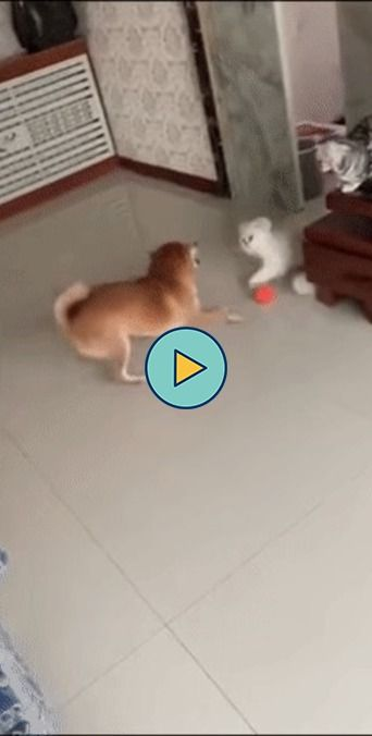 sempre a vera rivalidade cães e gatos