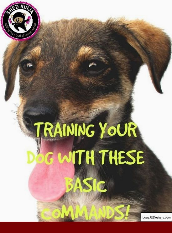 Dog Training Tips Submissive Urination And Pics Of How To Train A