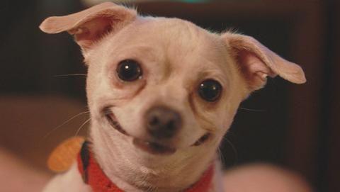 Perros Sonriendo Buscar Con Google Videos Divertidos De Perros Humor Divertido Sobre Animales Perros