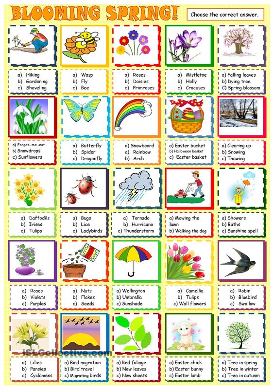 Spring Vocabulary Pictures 58