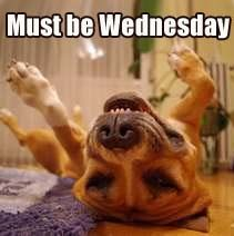 Funny Dogs Must be Wednesday! https://www.facebook.com/bluesodapromo