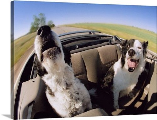 Uber Lyft Taxis With Dogs What Car Services Let You Bring Dogs Dogs Dog Car Funny Dogs
