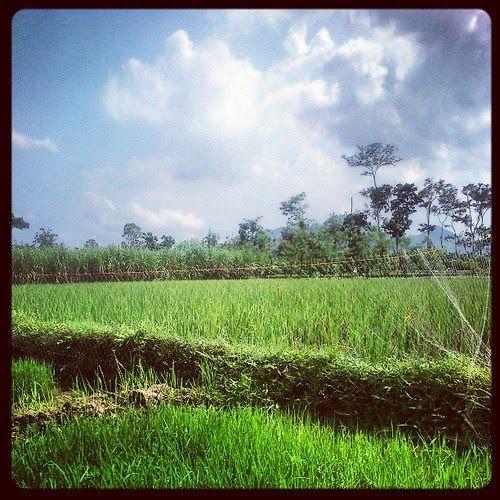 30 Gambar Pemandangan Nusantara Pemandangan Yang Slalu Kurindukan Sawah Desa Hijau Sejuk Download Foto Galeri Nusantara Raff Di 2020 Pemandangan Foto Alam Gambar