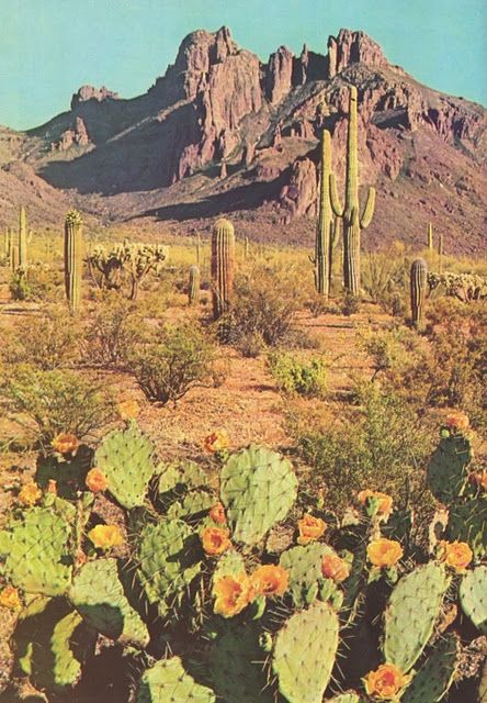 sweet home Arizona<3