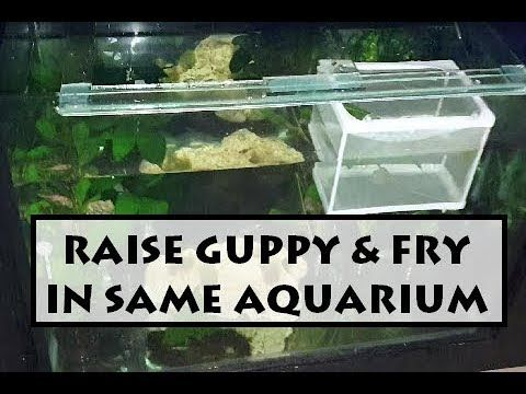 Pin On Aquarium Diy Projects