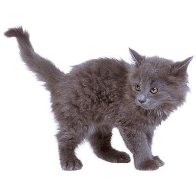 grey kitten cat cat transparent png images pinterest kitchen clipart kitchen clipart free