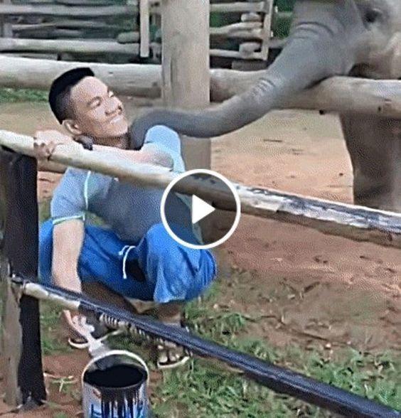 O elefante fez de tudo para atrair a atenção desse homem