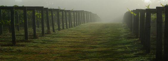 Bolney Wine Estate, West Sussex, England.