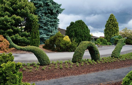 Conifer Topiary | Flickr - Photo Sharing!