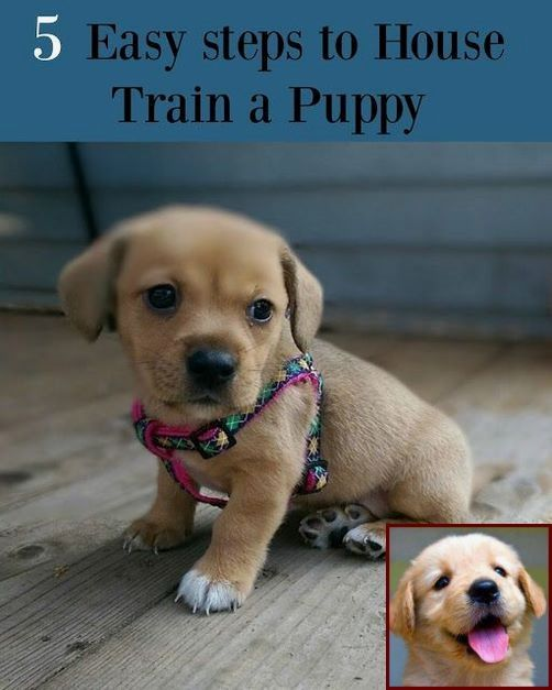 House Training A Puppy With No Garden And Dog Trainer Class Near