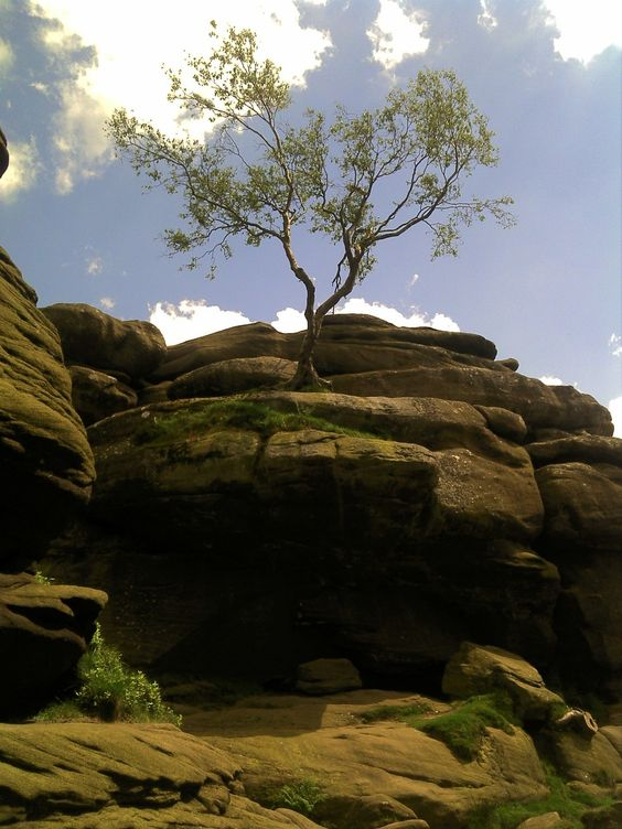 This Rowan tree must have one of the best views in Yorkshire, perched atop Castle Rock