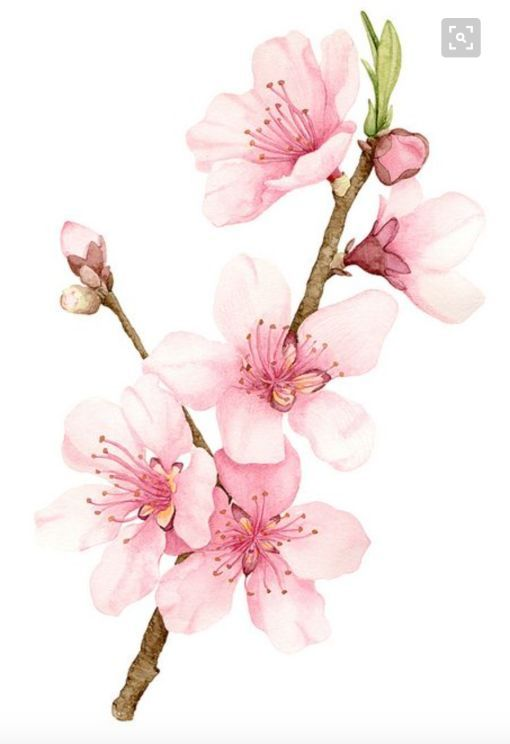 Cherry Blossom Inspiration From Etsy And Pinterest Cherry Blossom Drawing Cherry Blossom Painting Cherry Blossom Art