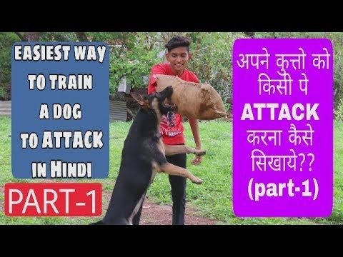 How To Train A Dog To Attack On Command In Hindi Part 1 Dog