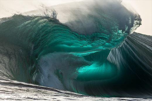 恐怖 海洋 症 生物