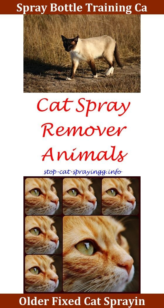 Cat Spray Tips Spray To Stop Cat From Pooping On Carpet Clean Cat Spray Pepper Spray Effects On Cats Do Male Ca Cat Spray Flea Spray For Cats Male Cat Spraying