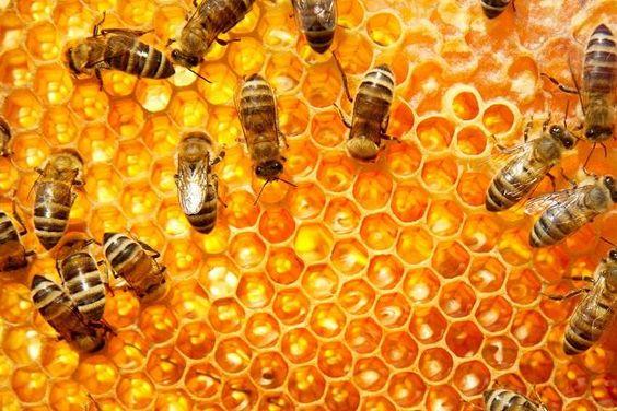 Covesia.com - Setelah diserang ribuan lebah saat mencoba mengambil madu dari sarangnya pada Minggu (5/3/2015) di New Port Richey, tiga orang akhirnya dirawat...