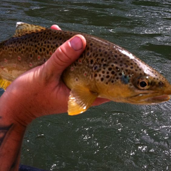 Fly fishing on the green river dutch john utah taken for Fly fishing green river utah