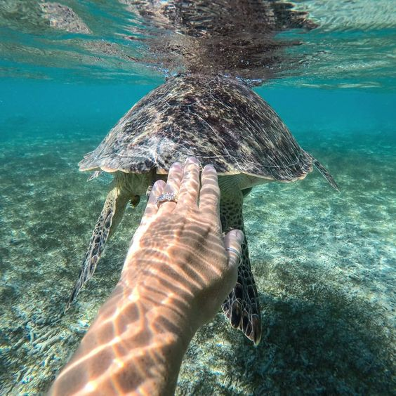 The friendly turtles of Gili Trawangan!
