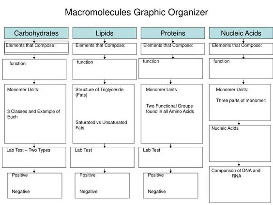 Biomolecules Worksheet Unit 2 Moreover Venn Diagram Blank Worksheet ...