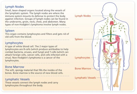 hodgkin s lymphoma informative speech Diagnosis non-hodgkin's lymphoma is the sixth most common type of cancer  in the us  get information about non-hodgkin's lymphoma (nhl) and  hodgkin's disease  speaking with a nutritionist can be very helpful.