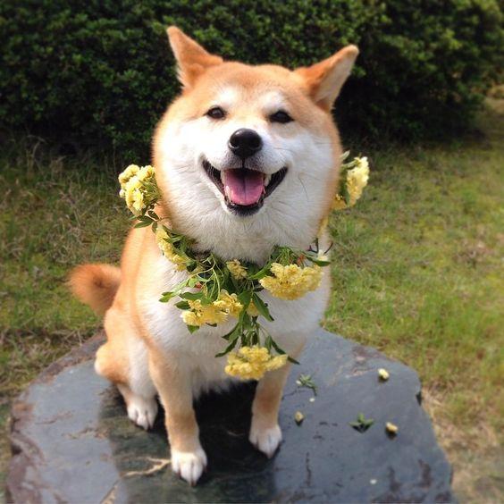 花の首飾りをつけるかわいい子犬