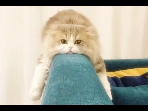 Cats Are Awesome And Super Funny Too Who Doesn T Like Cats And Kittens They Make Us Laugh And Happy Just Lo Cute Kitten Gif Kittens Cutest Cats And Kittens