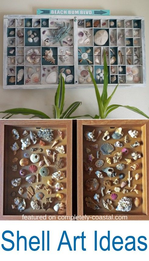 Diy Framed Shell Wall Art Seashell Projects Sea Shell Decor