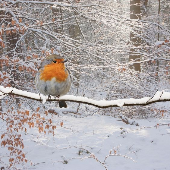 Red breast: