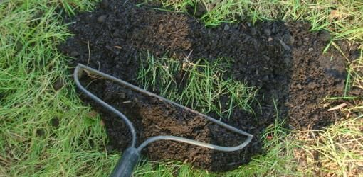 Top dressing to improve the soil in your lawn