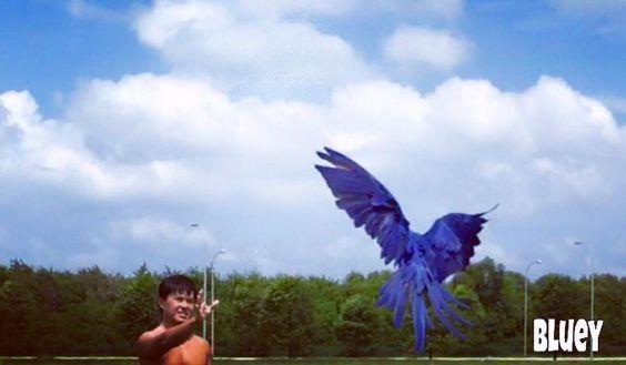 Too hot for flying!  #hyacinthmacaw #parrots #macaws #loro #guacamaya #papagaio #papegøje #papegaai #papagei #pappagalli #papuga #Попугаи #papağan #鸚鵡  #affinityflight #parrot #macaw #guacamayo #arara #perroquet #papagaj #pappagallo #papegøye #Попугай #papegoja #ببغاء #オウム#앵무새 #طوطی #flyingparrots #freeflyingparrots